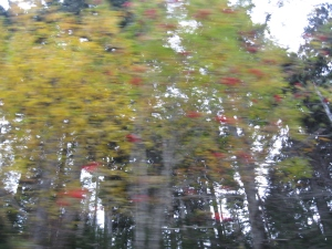 More trees of the Smokies